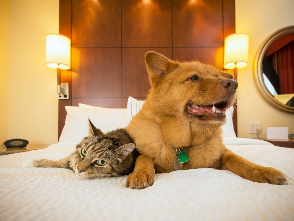 Como tornar seu hotel pet friendly