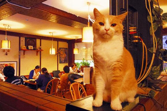 Restaurante com gato
