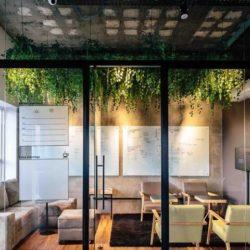 Biofília na arquitetura e design de interiores