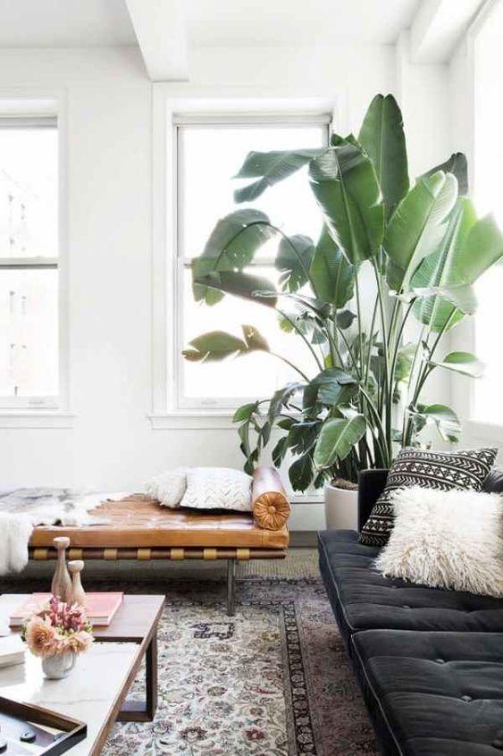 casa com plantas para o verão