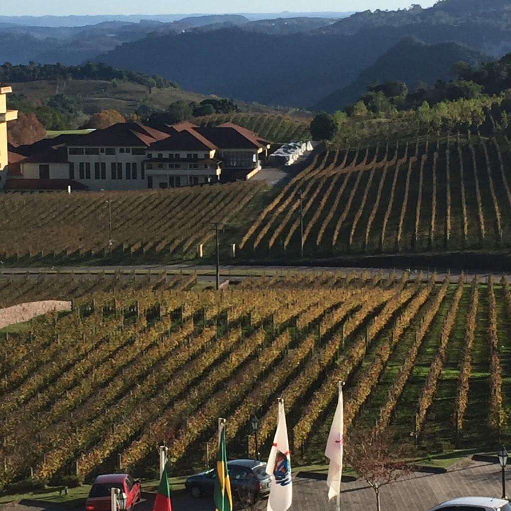 visão vinícola