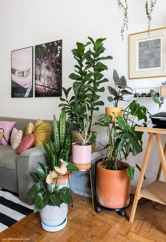 plantas na sala