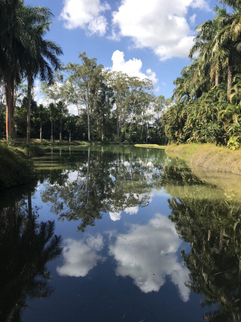 área verde em Inhotim