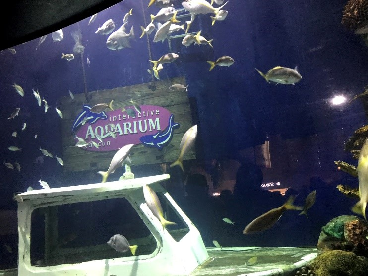 Interactive Aquarium Cancun, localizado no La Isla Cancun Shopping Village.