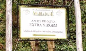 Placa que leva a produção de azeitonas também na fazenda